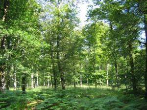 Forêt Atelier Lebouvier